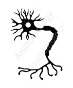 Neuron Sticker (Black) Vinyl Decal